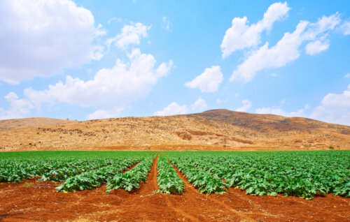 Israeli Agritech: A Force [of Nature] to be Reckoned With