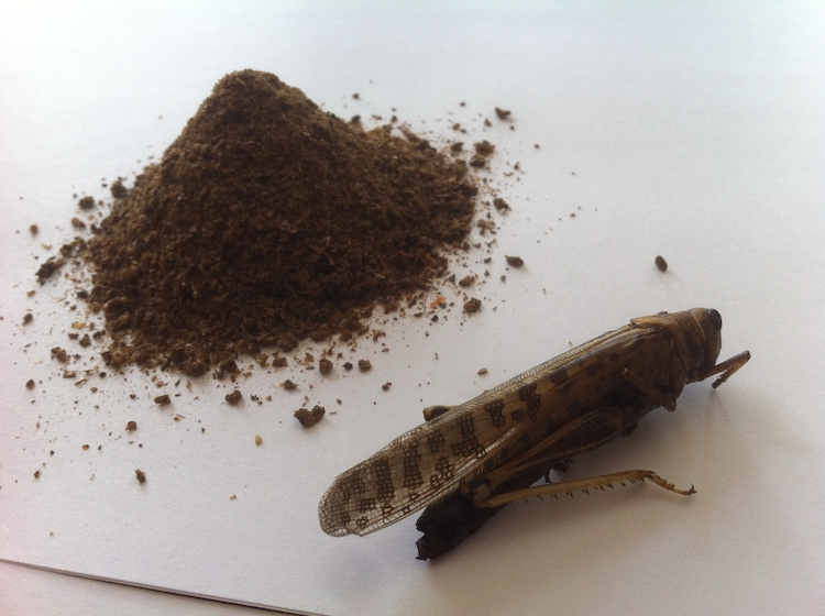 Hargol FoodTech - Protein Powder and Grasshopper